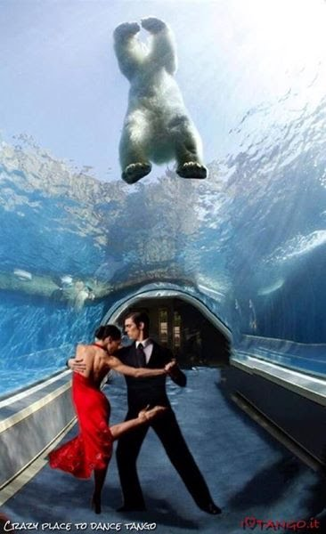 tango photo polar bear underwater